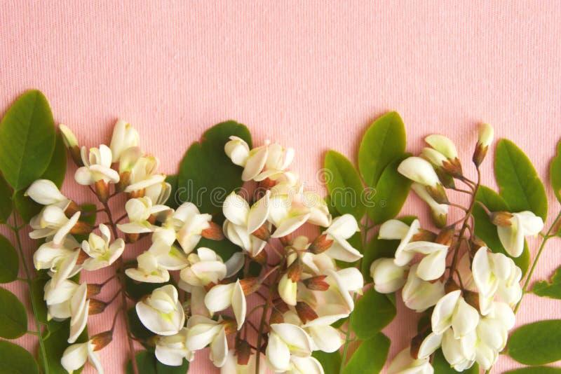 Fiori della primavera su fondo rosa fotografie stock