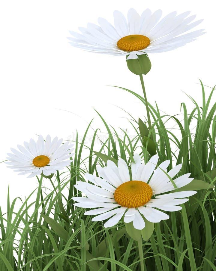 Fiori della sorgente in erba su bianco illustrazione di stock