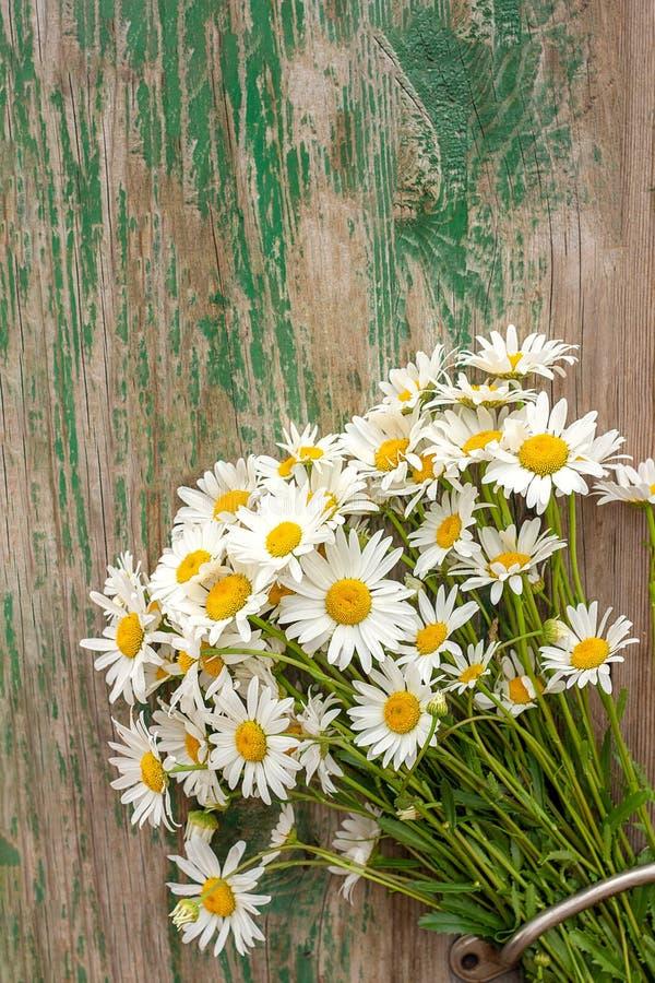 Fiori delle margherite della camomilla di campo del mazzo in maniglia di porta su vecchio fondo di legno Regalo romantico rustico fotografie stock