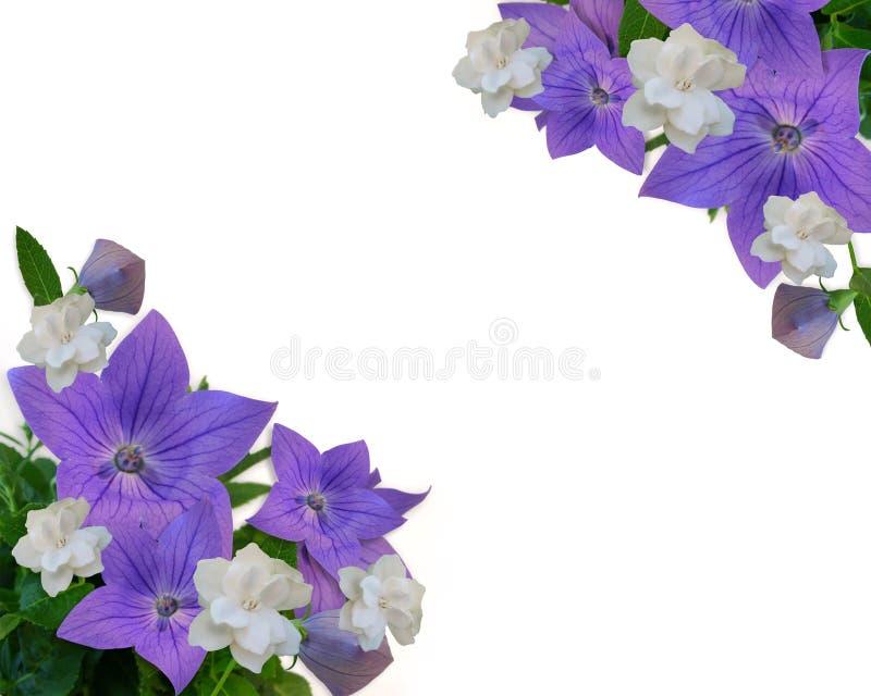 Fiori di aerostato blu del bordo floreale illustrazione di stock