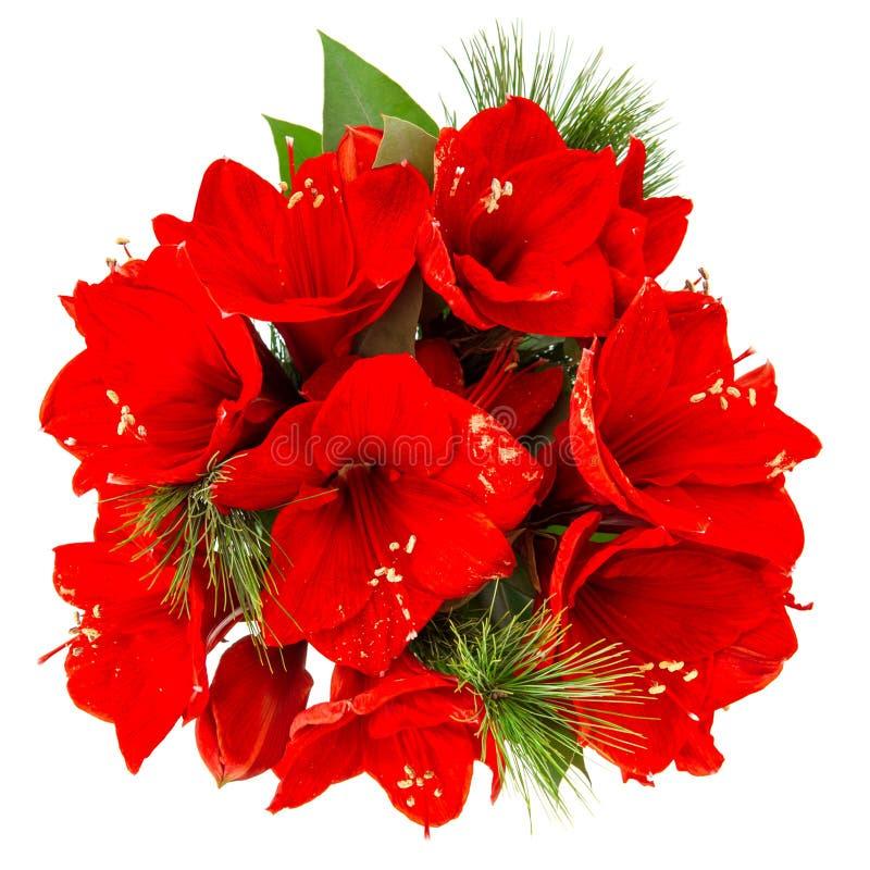 Fiori di Amaryllis Il natale rosso fiorisce il mazzo fotografie stock libere da diritti