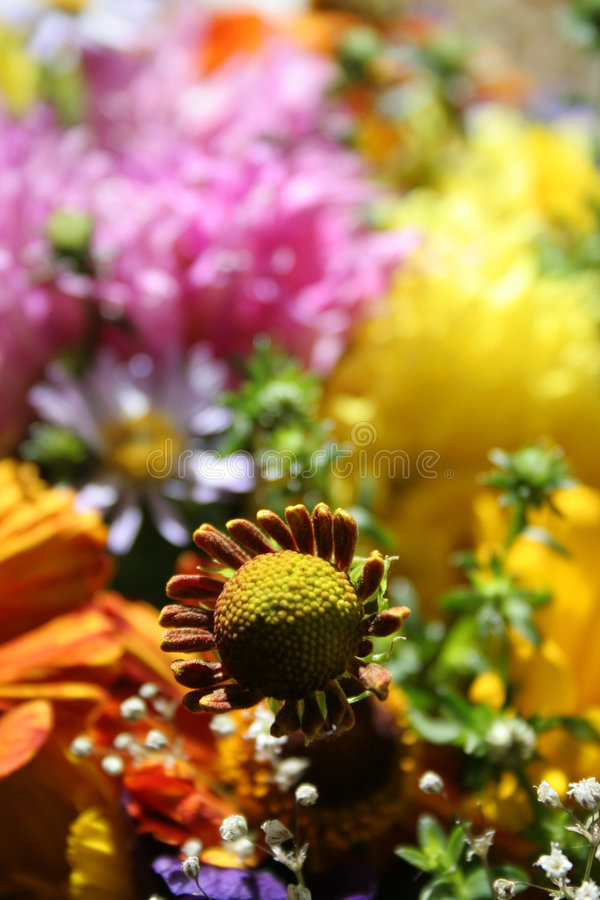 Download Fiori di autunno fotografia stock. Immagine di background - 221898