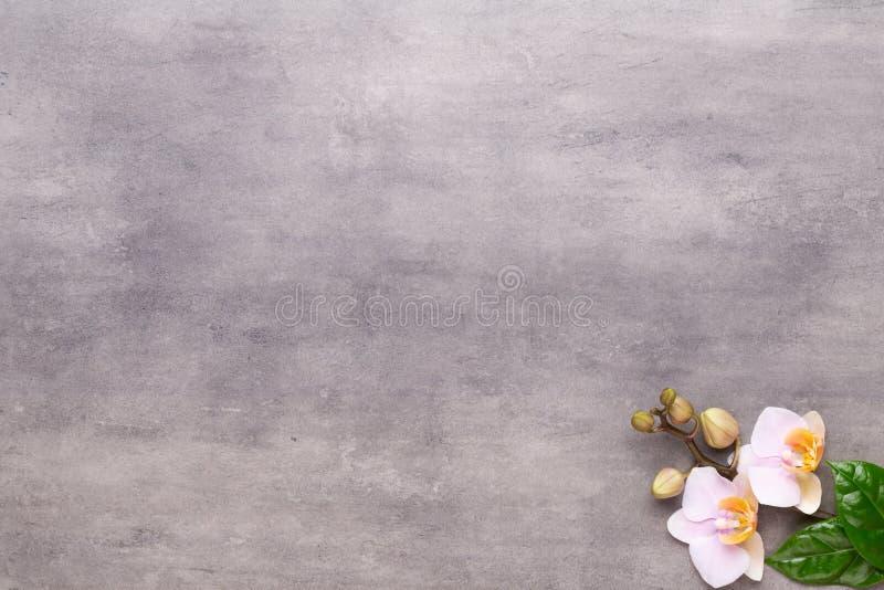 Fiori di bellezza dell'orchidea su fondo d'annata Fondo della stazione termale, terapia della stazione termale, bellezza Stazione immagine stock libera da diritti