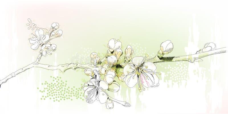 Fiori di ciliegia royalty illustrazione gratis