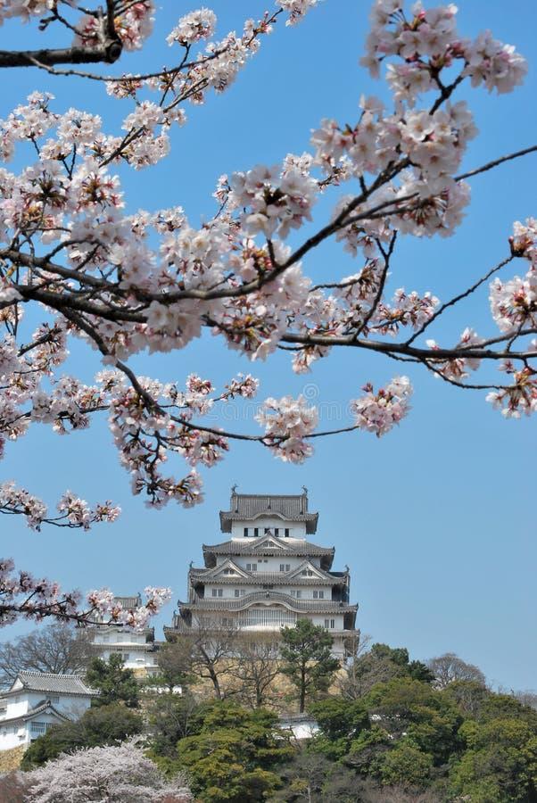 Fiori di ciliegia al castello di Himeji immagine stock