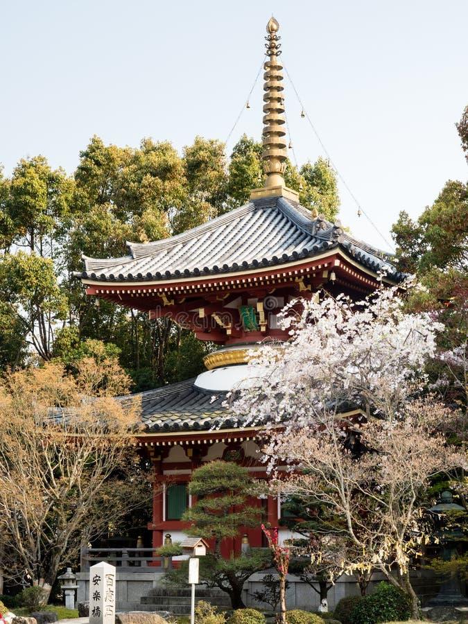 Fiori di ciliegia in Anrakuji, tempio numero 6 del pellegrinaggio dello Shikoku fotografie stock libere da diritti