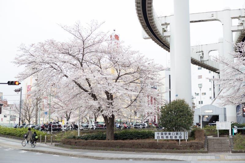 fiori di ciliegia a Chiba fotografia stock