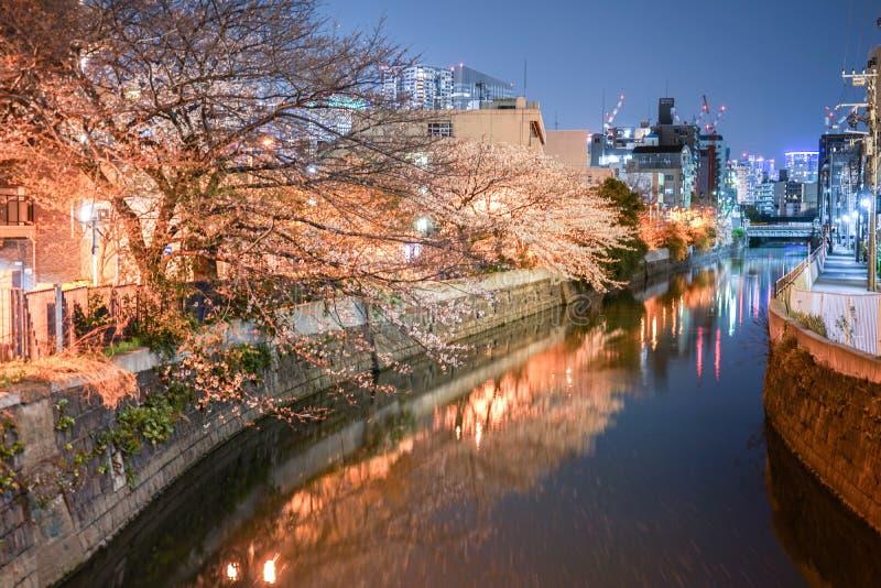 Fiori di ciliegia ed il paesaggio urbano di Yokohama del fiume leggero dell'indumento della canapa fotografia stock