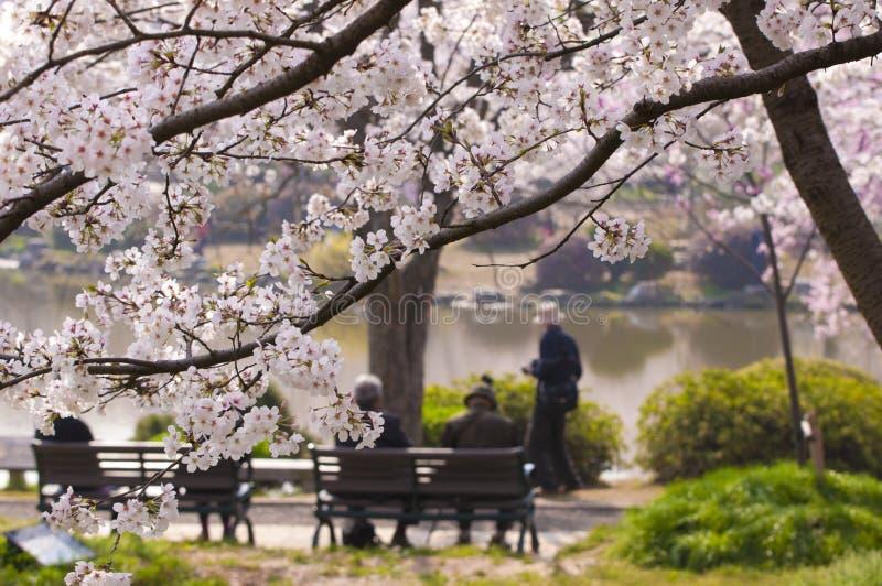 Fiori di ciliegia in fioritura fotografia stock libera da diritti