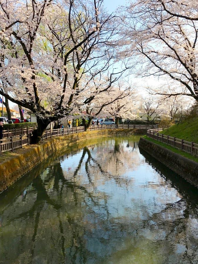 Fiori di ciliegia in Gunma fotografie stock