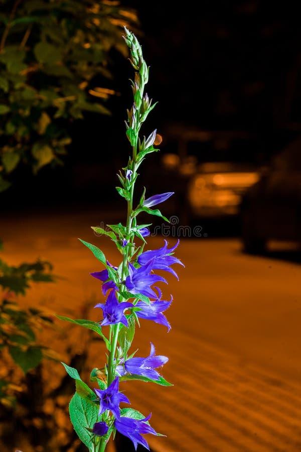 Fiori di estate fotografie stock libere da diritti
