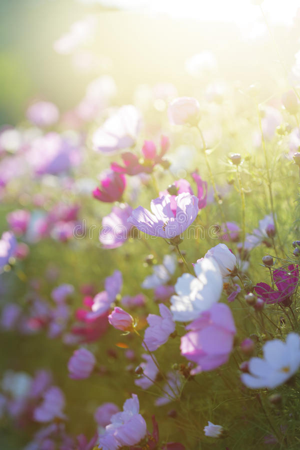 Fiori di estate fotografie stock