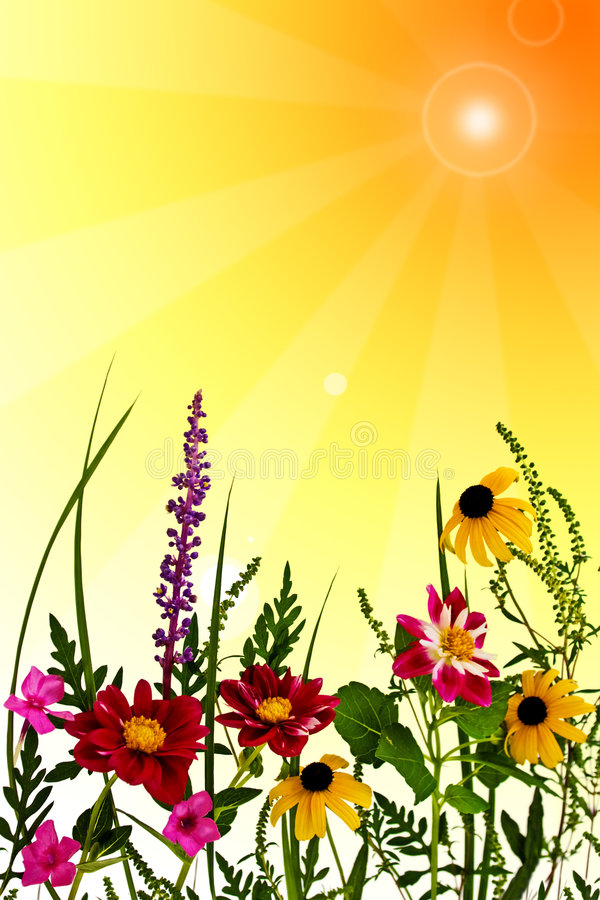 Fiori di estate immagini stock libere da diritti