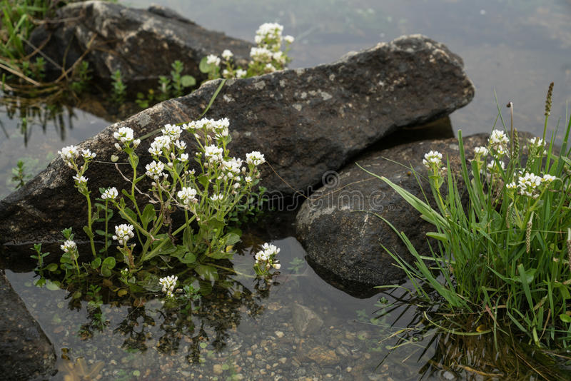 Fiori di estate in acqua fotografia stock