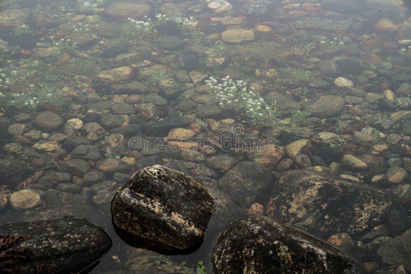 Fiori di estate in acqua fotografia stock libera da diritti