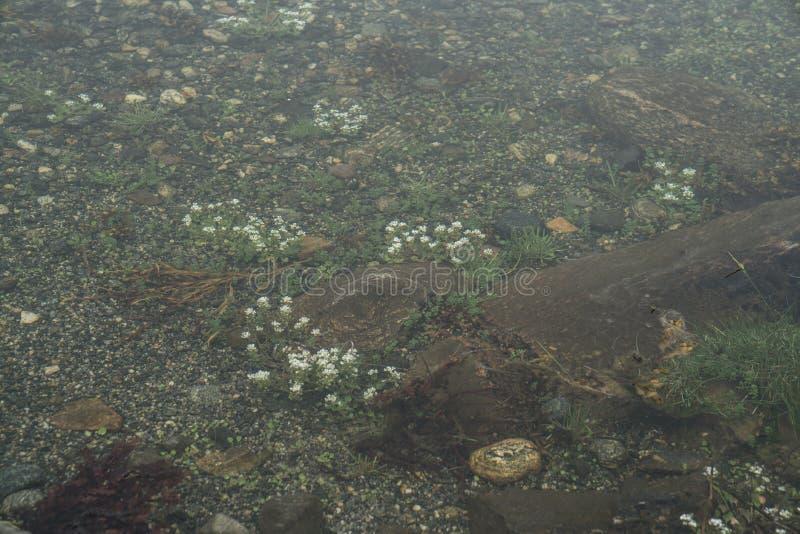 Fiori di estate in acqua immagini stock libere da diritti