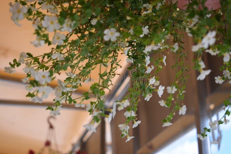 Fiori di estate nella città immagini stock