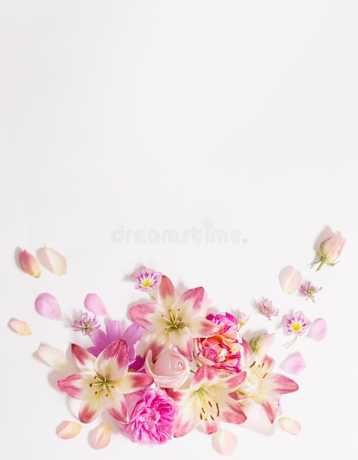 Fiori di estate su fondo bianco fotografia stock libera da diritti