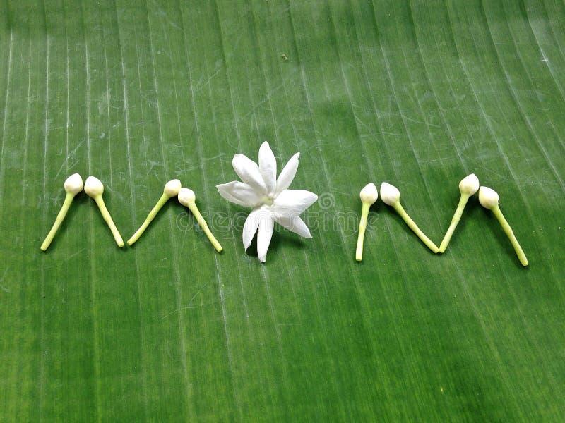 Fiori di festa della mamma come simboli della Tailandia fotografie stock