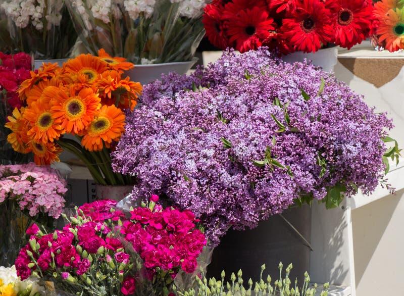 Fiori di fioritura variopinti in vaso immagine stock