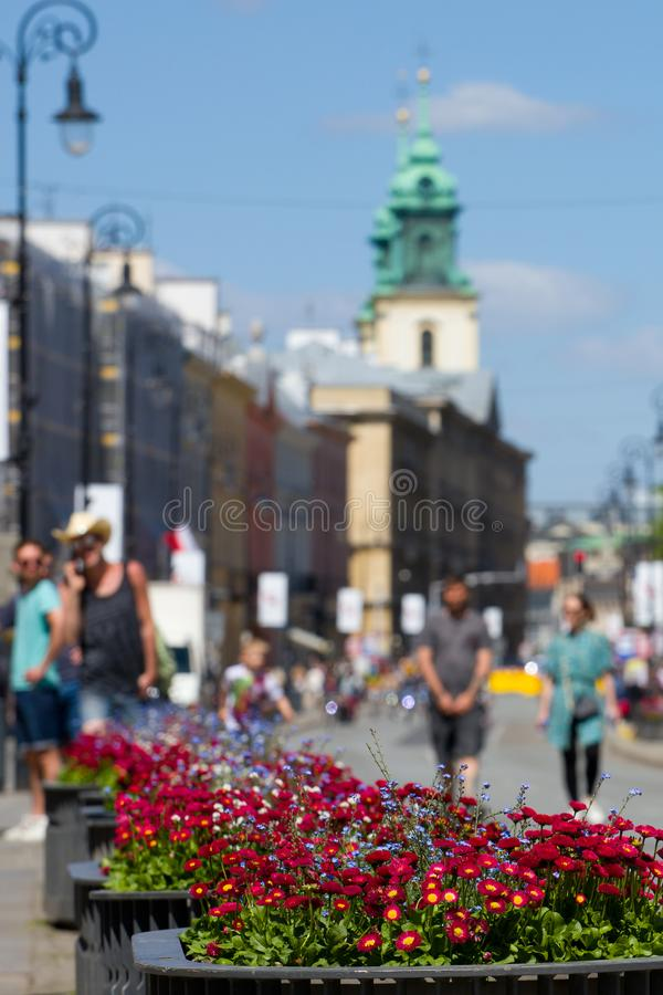 Fiori di fioritura a Varsavia immagine stock libera da diritti
