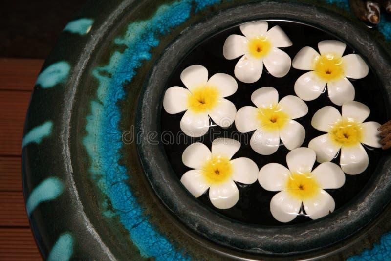 Download Fiori di galleggiamento immagine stock. Immagine di fiori - 3884645
