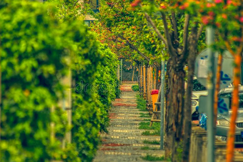 Fiori di giorno soleggiato del percorso della strada immagini stock libere da diritti