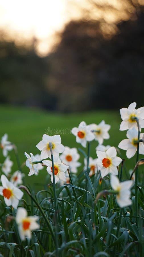 Fiori di primavera fotografia stock