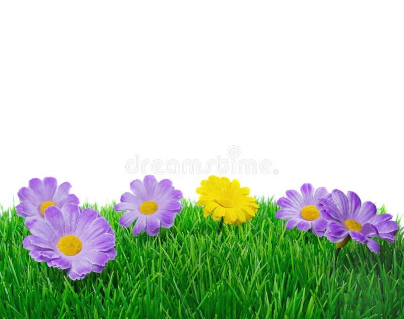 Fiori di primavera su erba immagine stock