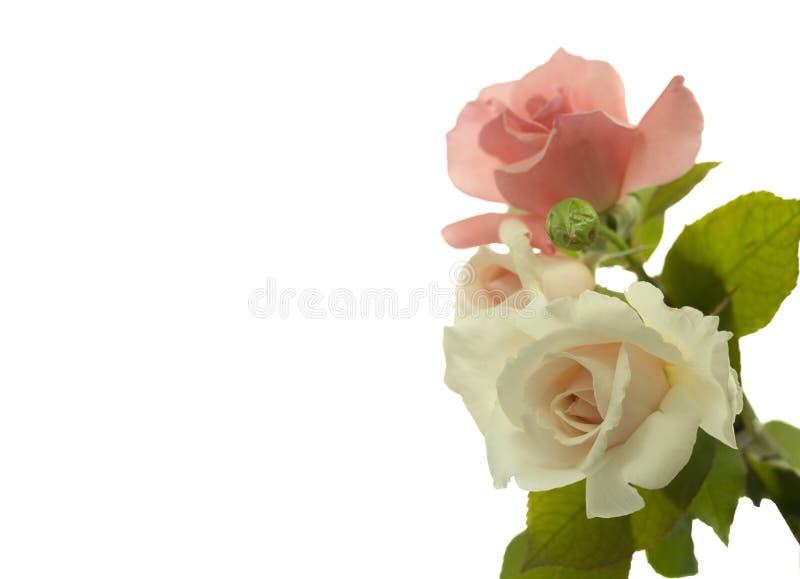 Fiori di rosa del biglietto di S. Valentino fotografia stock