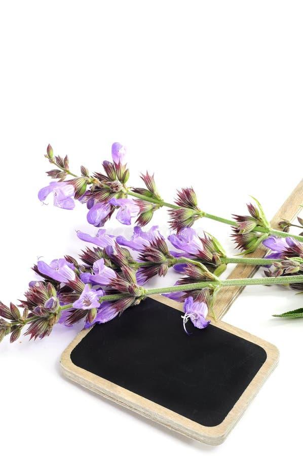Fiori di Salvia immagine stock