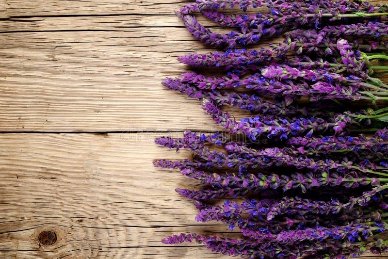 Fiori di Salvia su legno fotografia stock libera da diritti