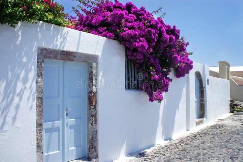 Fiori di Santorini fotografie stock libere da diritti