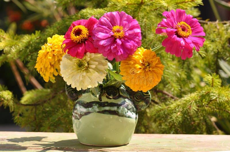 Fiori di zinnia in vaso fotografie stock libere da diritti
