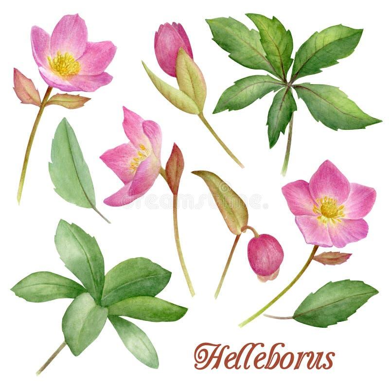 Fiori dipinti a mano dell'acquerello messi nello stile d'annata ` s perfetto per le cartoline d'auguri, invito di nozze, complean royalty illustrazione gratis