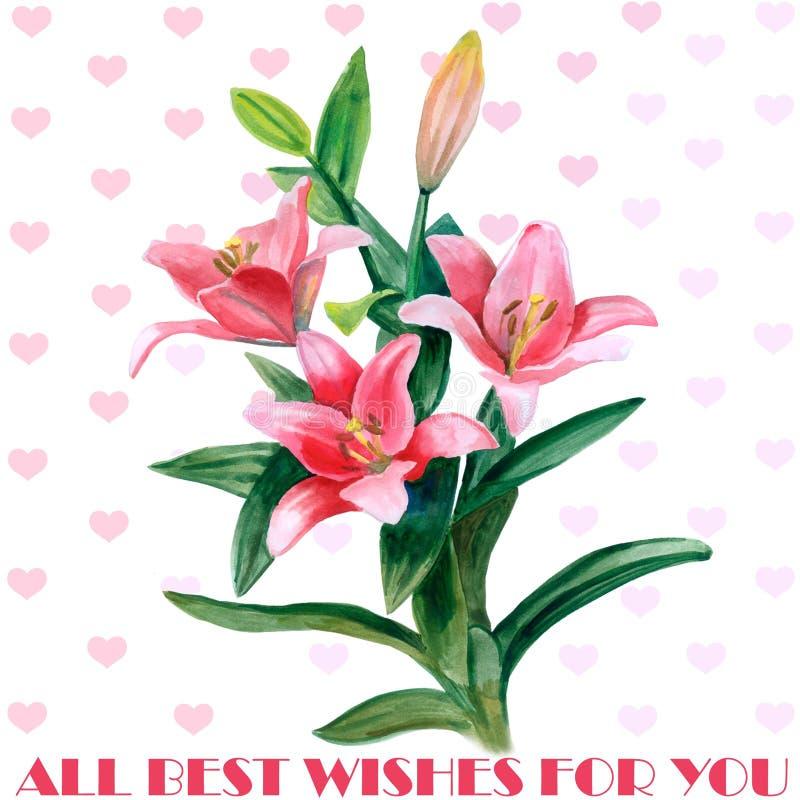 Fiori disegnati a mano del giglio dell'acquerello isolati su fondo bianco Fiori del fiore della primavera Manifesto ideale per il royalty illustrazione gratis