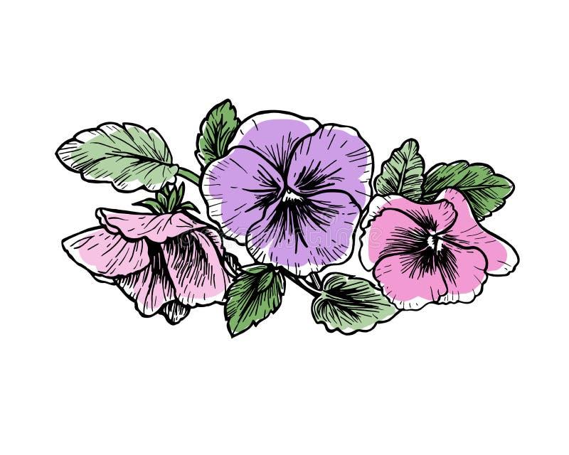 Fiori disegnati a mano della pans illustrazione for Fiori disegnati