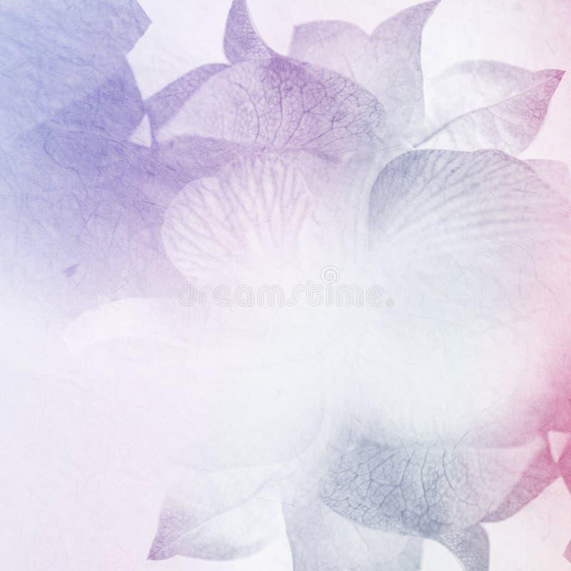 Download Fiori Dolci Nello Stile D'annata Di Colore Su Struttura Della Carta Del Gelso Fotografia Stock - Immagine di italia, adattato: 55364606