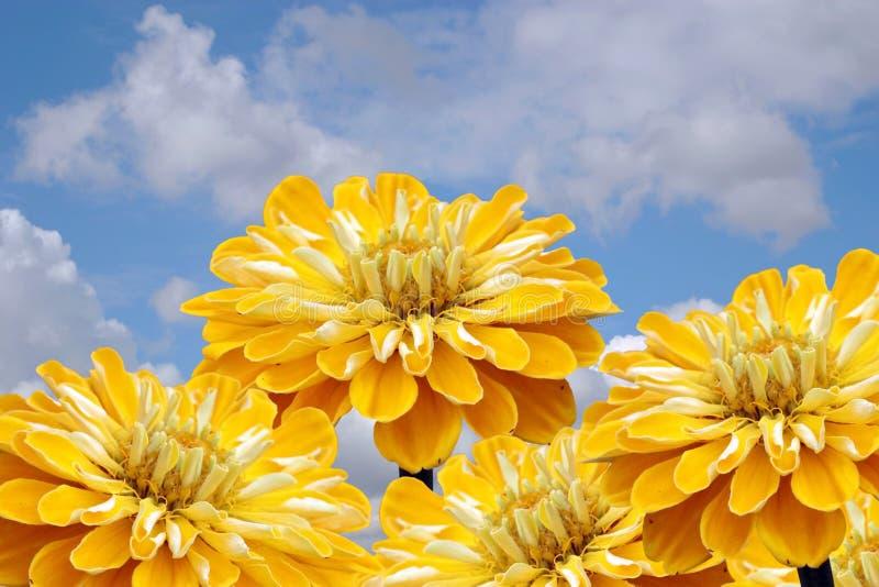 Fiori e cielo gialli. immagine stock libera da diritti