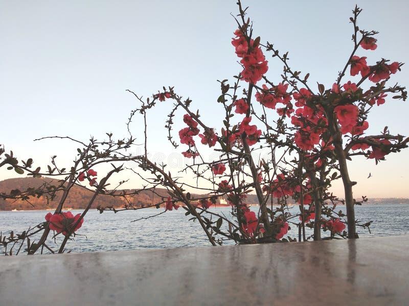 Fiori e colori in Turchia immagine stock
