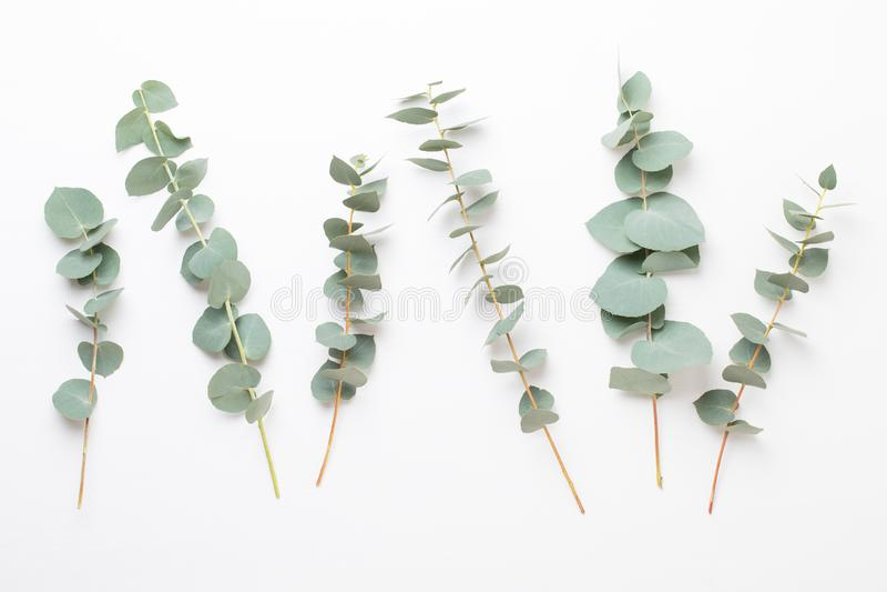 Fiori e composizione in eucaaliptus Modello fatto di vari fiori variopinti su fondo bianco Vita posta piana dello stiil immagini stock libere da diritti