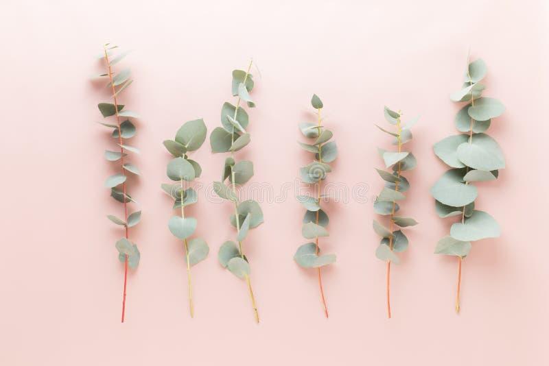 Fiori e composizione in eucaaliptus Modello fatto di vari fiori variopinti su fondo bianco Vita posta piana dello stiil fotografia stock