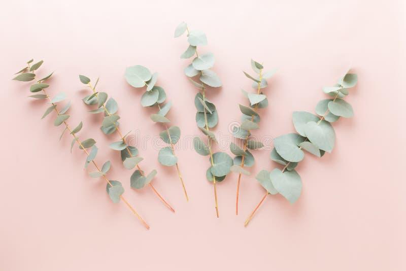 Fiori e composizione in eucaaliptus Modello fatto di vari fiori variopinti su fondo bianco Vita posta piana dello stiil fotografia stock libera da diritti
