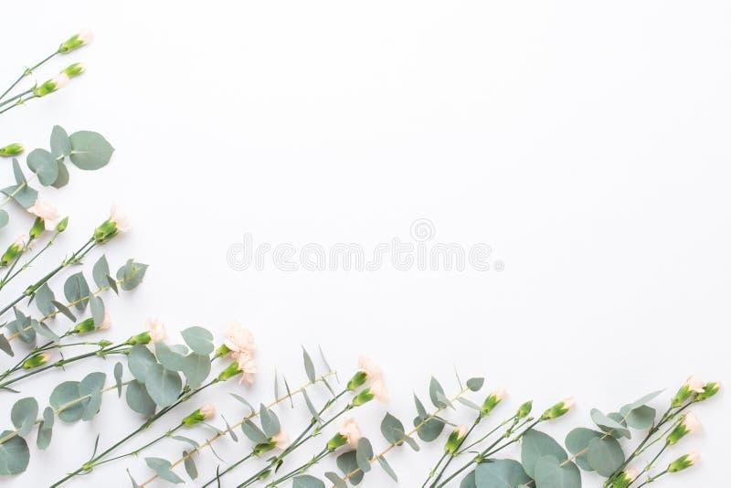 Fiori e composizione in eucaaliptus Modello fatto di vari fiori variopinti su fondo bianco Vita posta piana dello stiil immagine stock