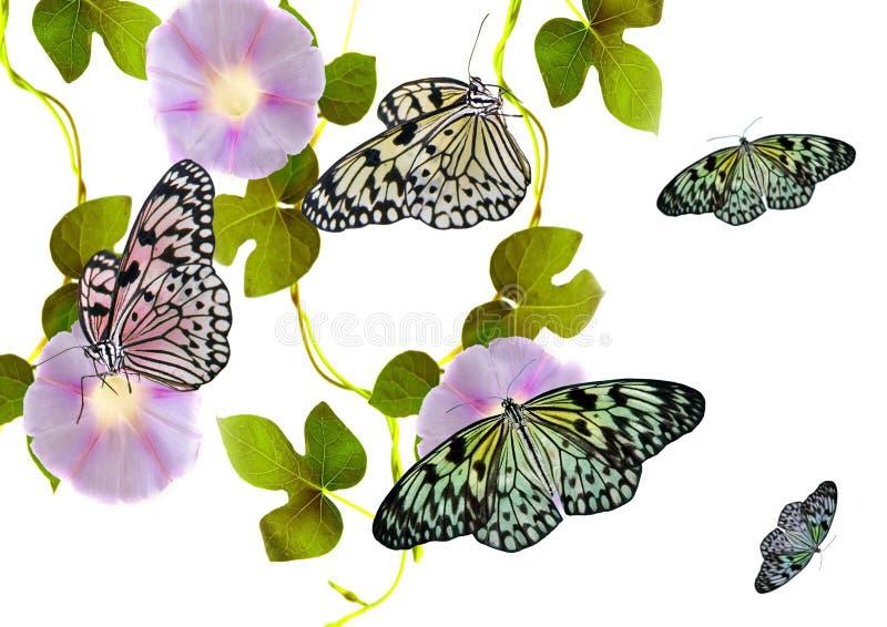 Download Fiori e farfalle immagine stock. Immagine di seduta, singolo - 7308831