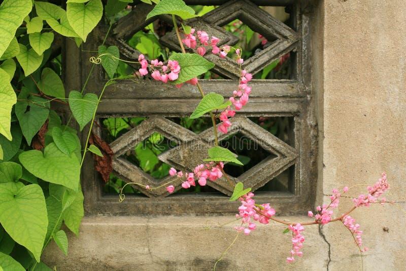 Fiori e foglia rosa dello scalatore fotografie stock libere da diritti
