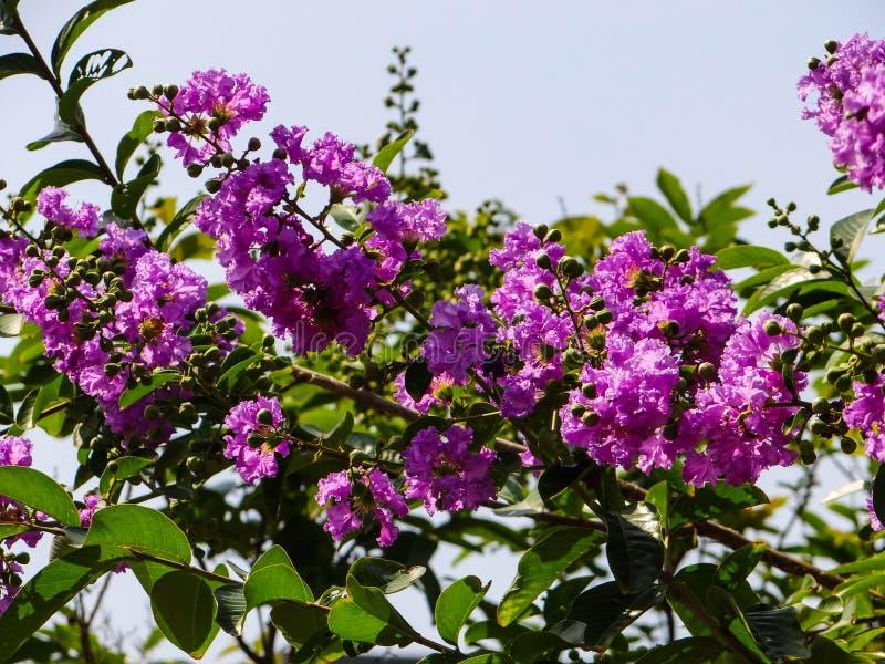 Fiori e foglie fotografia stock libera da diritti