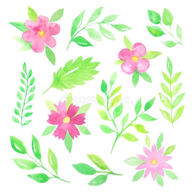 Fiori e foglie dell'acquerello royalty illustrazione gratis