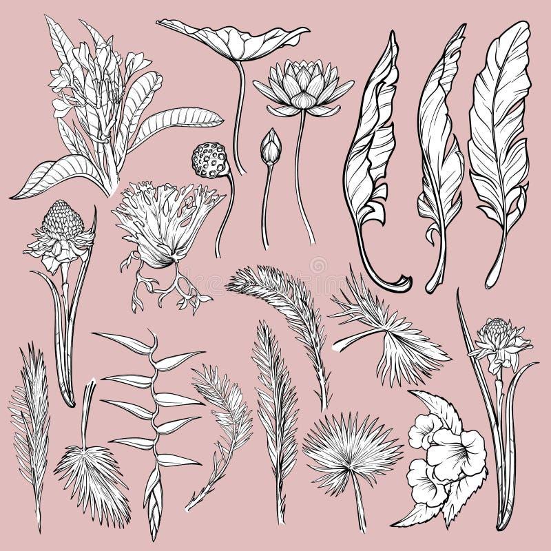 Fiori e foglie disegnati a mano delle piante tropicali Insieme floreale di stile grafico isolato su fondo rosa Lotus, Heliconia illustrazione vettoriale