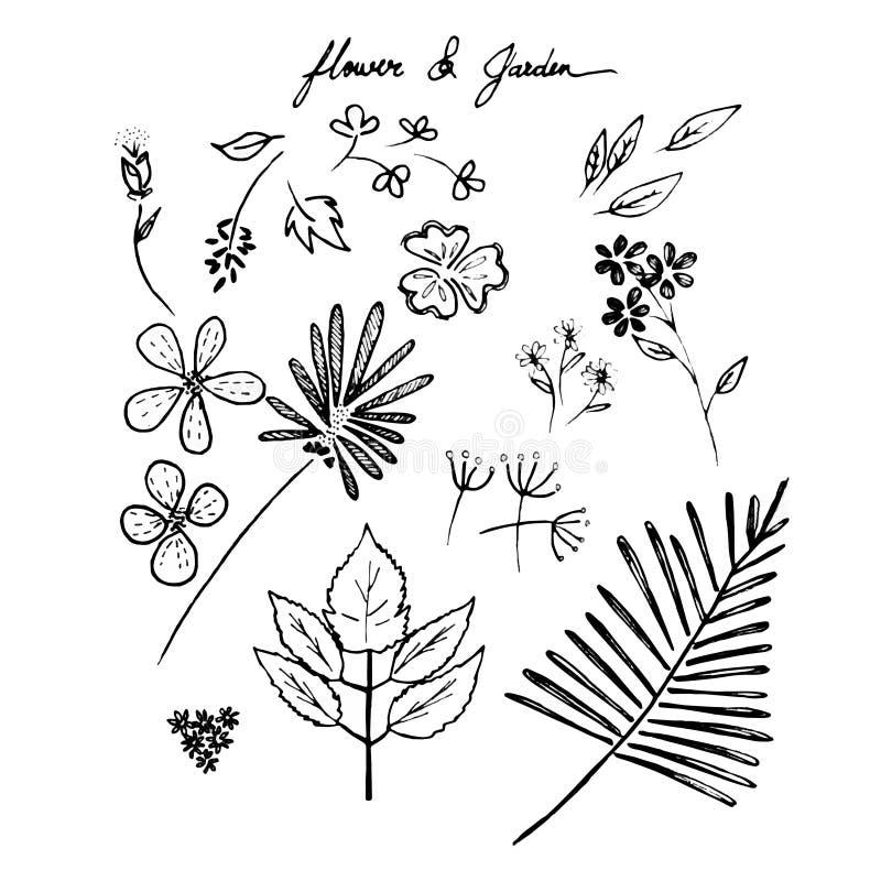Download Fiori E Giardini Disegnati A Mano Illustrazione di Stock - Illustrazione di disegno, rustic: 56885159